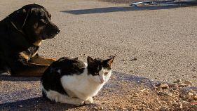 Estrasburgo: los internautas inundan #Neudorf de gatitos para ayudar a la policía