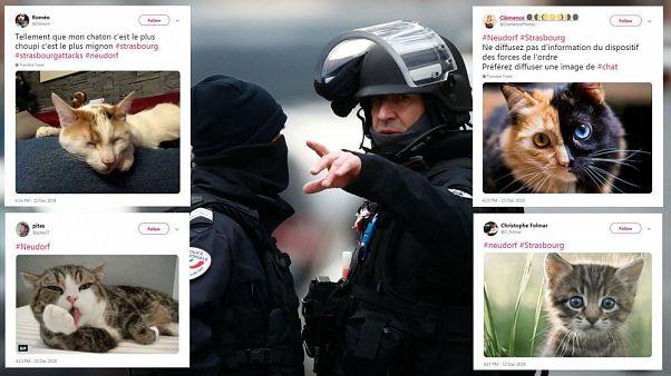 Strazburg saldırısı: Polise ait hassas bilgileri korumak için Twitter'i kedi görsellerine boğdular