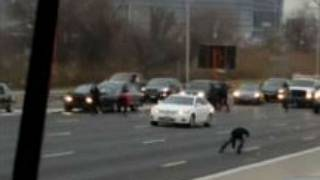 Money for nothing: drivers scramble to grab cash from motorway