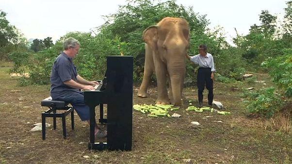 Thailand: Klassische Musik verzaubert blinde Elefanten