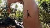 Il se sert des scorpions comme des antidouleurs