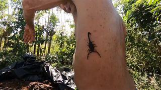 Cuba: Veneno de escorpião é remédio para as dores