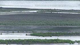 """Olanda: isole artificiali per """"restaurare"""" l'ambiente"""