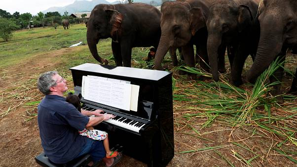 Watch: British pianist performs for retired elephants at Thai sanctuary