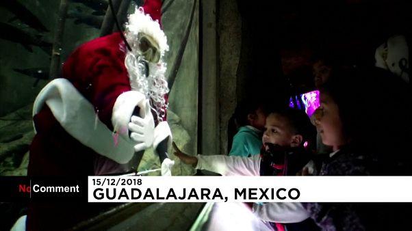بابا نوئل دریایی در آکواریوم مکزیک