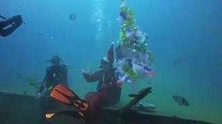 Karácsonyfa a tenger mélyén