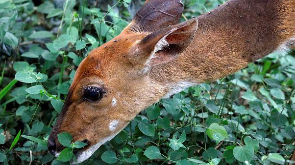 """Puni, le braconnier du Missouri ! Obligé de regarder """"Bambi"""" durant 1 an"""