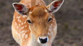 """29-Jähriger muss im Gefängnis """"Bambi"""" gucken"""