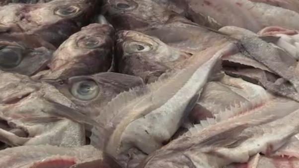 UE : les quotas de pêche fixés pour 2019