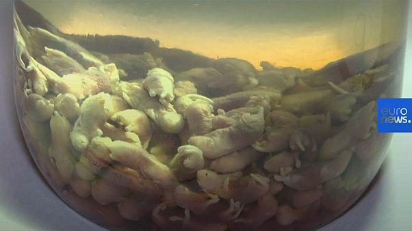Bienvenidos al delicioso museo de la comida asquerosa