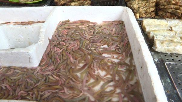 شاهد: ديدان مقلية ومقرمشة.. الطبق المفضل للفيتناميين في الشتاء