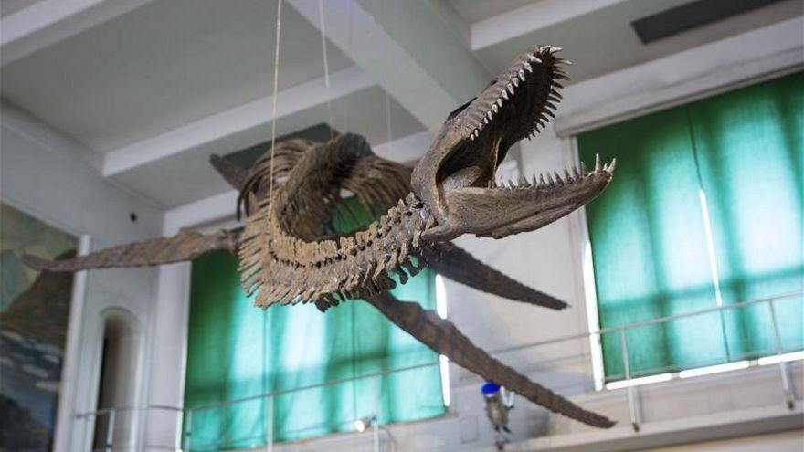 Arjantin'de paleontologlar 65 milyon yıllık dinozor fosiline hayat verdi