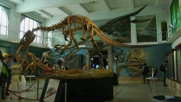 Argentine paleontologists show off Plesiosaur fossil replica