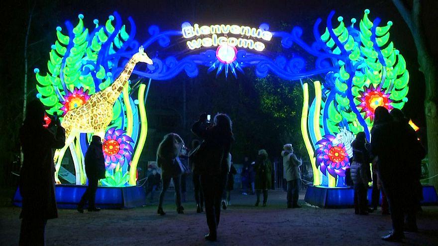 Espetáculo de lanternas e luzes destaca espécies ameaçadas no mundo