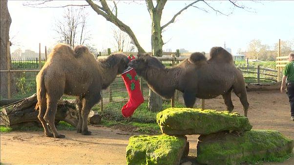 Рождественские подарки в зоопарке