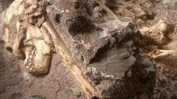 Yarı maymun yarı insan beyinli fosil: Evrimin eksik halkalarından biri mi?