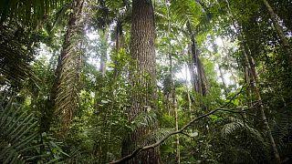 'İntihar Ormanı'nda ölüm sessizliğine karşı müzikle yaşam savaşı