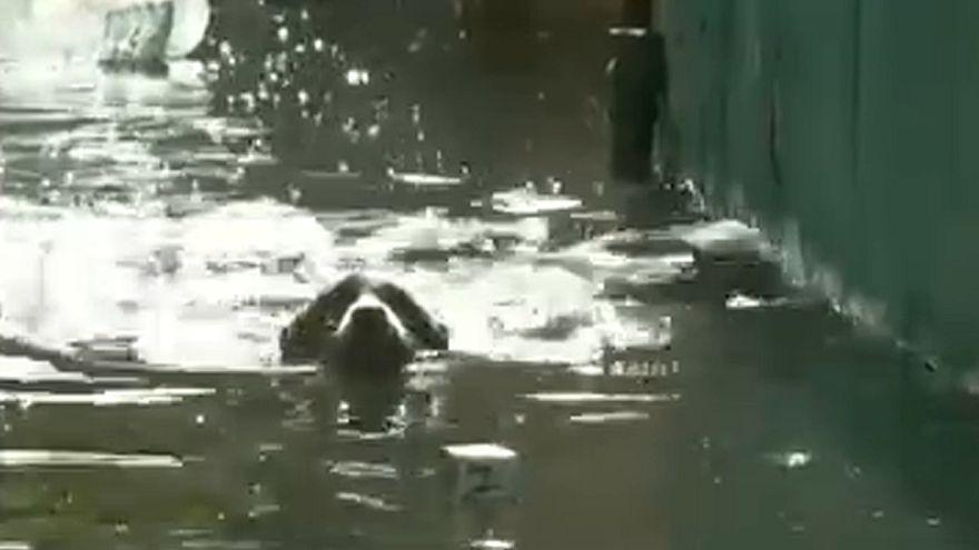 Temporal e inundações em Havana