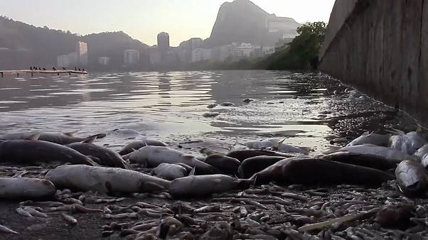 Brazil: Has the heat killed off thousands of fish in Rio?