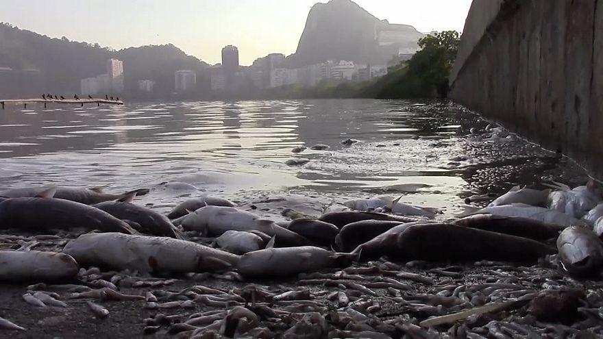 Brasile: a Rio quartiere soffocato dall'odore di 13 tonnellate di pesci morti