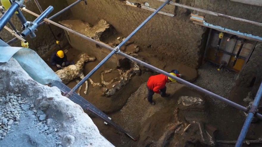 شاهد: العثور على جثة حصان عمرها حوالي 2000 سنة في بومبي الإيطالية