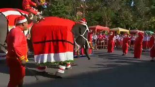 Слоны превратились в гигантских Санта-Клаусов