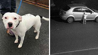 Szívszorító videó egy autóból kitett és ott hagyott kutyáról