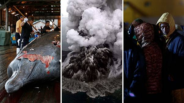 Whale hunting; Sicily earthquake; and Indonesia search | Five stories to know about today