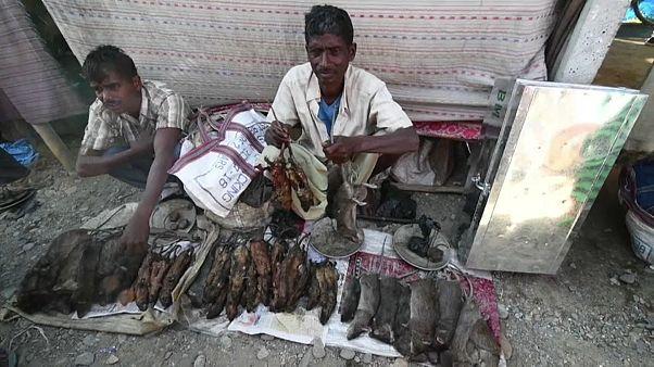 Video | Hindistan'da bir köy: Pazarın en gözde ürünü pişirilmiş fare eti