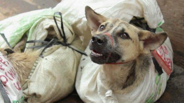 ¿El fin de la carne de perro en Corea del Sur?
