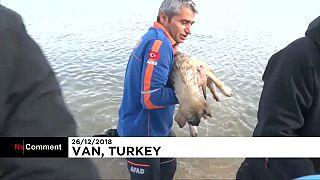 Befagyott tóból mentettek kutyát