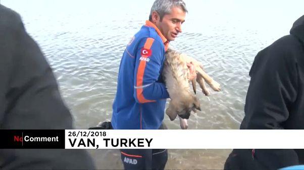 تلاش پلیس برای بیرون کشیدن یک سگ از دریاچه یخزده