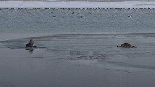 Puppy saved from frozen lake in Turkey