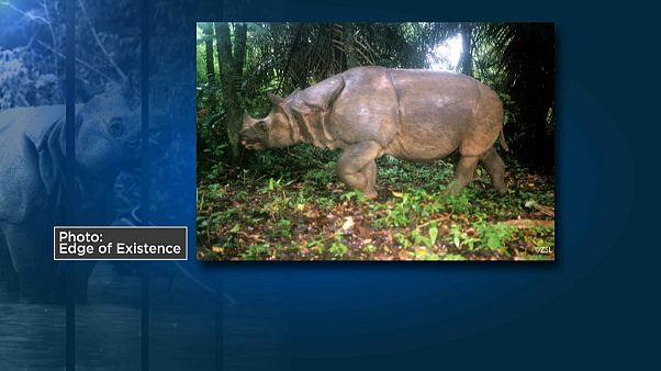Носороги под угрозой исчезновения