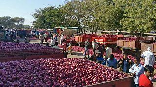 براندازی با پیاز و سیبزمینی؛ کشاورزان هندی دولت را تهدید کردند