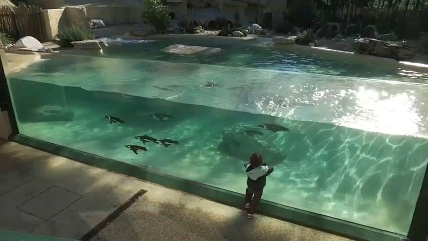 Африканских пингвинов поселили в Риме