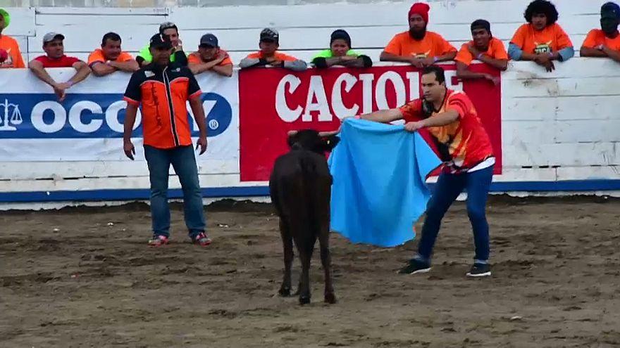 Kosta Rika'da geleneksel yıl sonu boğa güreşleri yapıldı