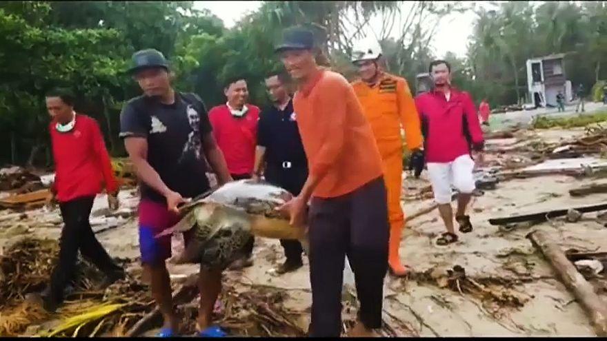 شاهد: إعادة 30 سلحفاة مهددة بالانقراض  إلى المحيط بعد نجاتها من تسونامي إندونيسيا