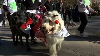 Собачье дефиле по улицам Мадрида
