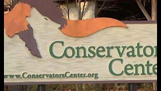 فيديو: أسد يفترس عاملة في مركز للحياة البرية بولاية أمريكية