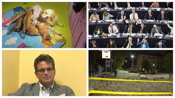 Sargentini-jelentés, óriási hitel Magyarországnak, elbocsátott szívsebész, tigriseket nevelő kutya