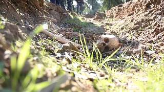 Children's remains discovered in mass grave in Iraq