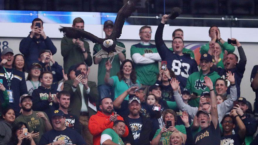 شاهد: نسر يحط على أحد المتفرجين قبل مباراة كرة قدم في الولايات المتحدة