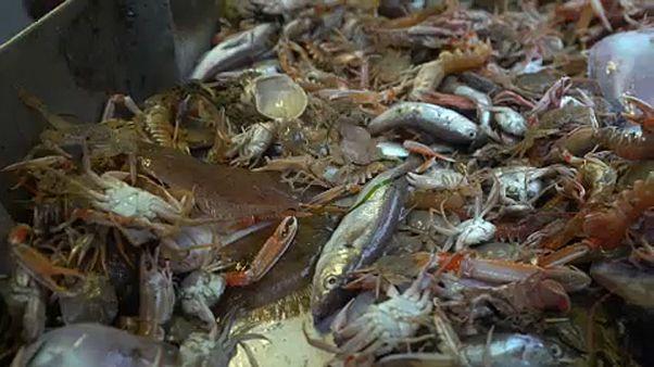 No más desperdicios, en la pesca en Europa