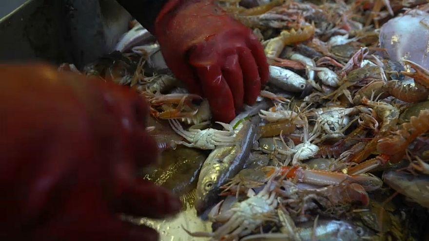 EU: Fisch-Beifang essen, nicht ins Meer kippen