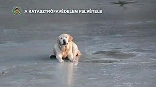 شاهد: انقاذ كلب علق في بحيرة متجمدة في المجر