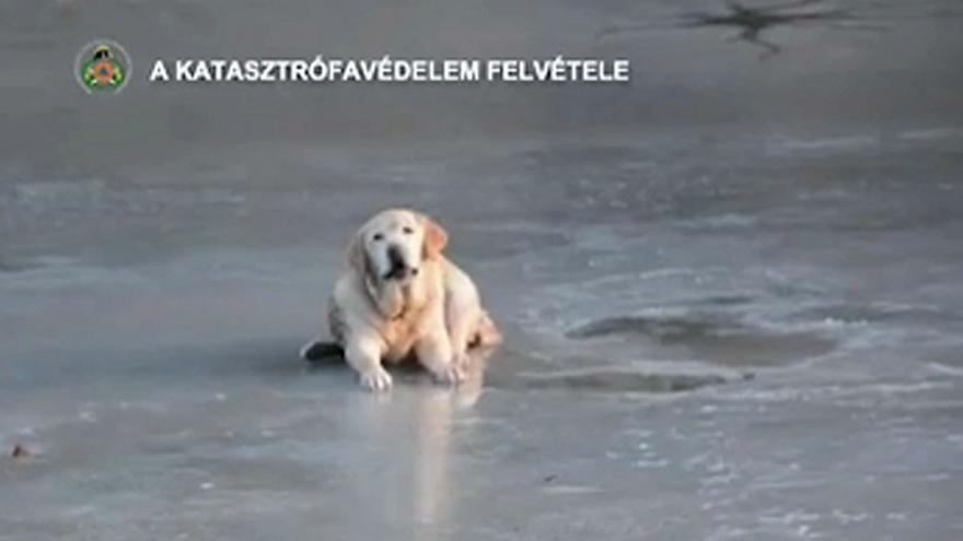 Dog rescued from frozen lake in Hungary