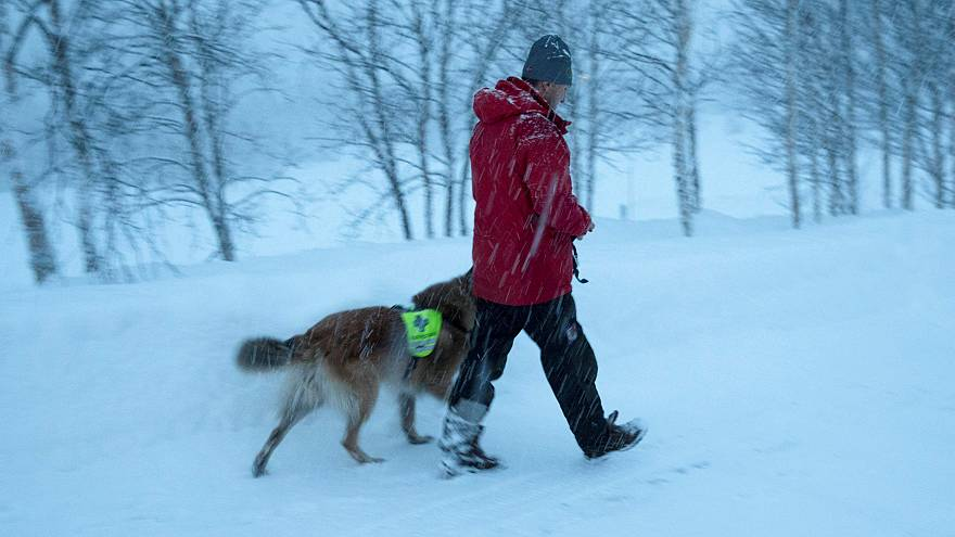 A rescue worker and his dog search for the four missing skiers