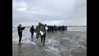 Treasure hunters pick up goods from washed up cargo shipments
