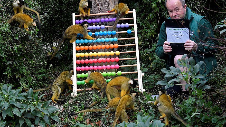 Hayvanat bahçesinde abaküsle nüfus sayımı